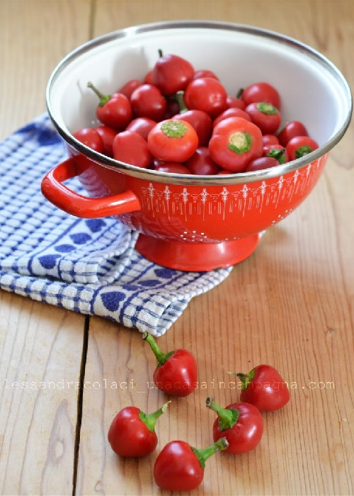 B5-peperoncini-piccanti-ripieni-al-tonno-foto2