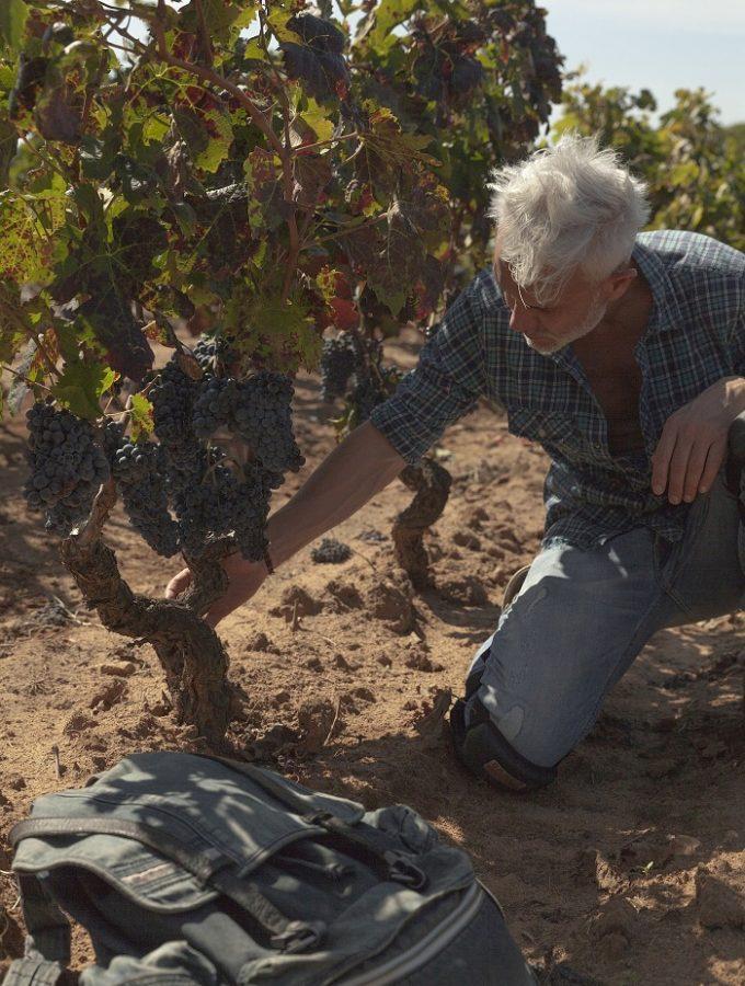 """Torna Marco Simonit """"inviato nelle vigne"""" nel format Tv Signori del Vino"""
